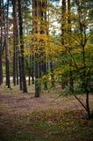 Красивый парк осени в Kyiv, Украине Стоковые Фото