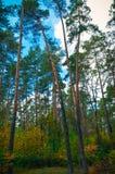 Красивый парк осени в Kyiv, Украине Стоковые Изображения RF