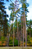 Красивый парк осени в Kyiv, Украине Стоковое Фото