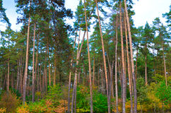 Красивый парк осени в Kyiv, Украине Стоковое Изображение RF