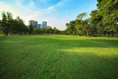 Красивый парк света утра публично с полем травы и gree стоковое изображение