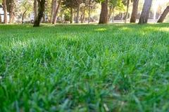Красивый парк сцены парка публично с полем зеленой травы стоковая фотография