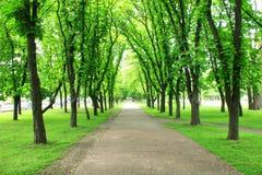 Красивый парк с много зеленых деревьев стоковые изображения
