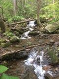 Красивый парк штата Georgia Vogel стоковое изображение rf
