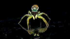 Красивый паук на стекле, скача паук в Таиланде Стоковая Фотография