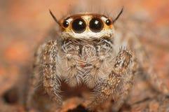 Красивый паук. Стоковые Фотографии RF