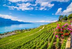 Красивый пейзаж в винодельческом регионе Lavaux с женевским озером, Швейцарией Стоковое Изображение RF