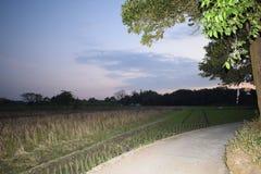 Красивый пейзаж в после полудня стоковые изображения rf