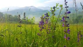 Красивый пейзаж в утре Стоковое Изображение