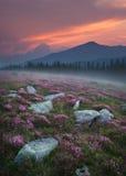 Красивый пейзаж горы в Румынии на заходе солнца стоковые изображения