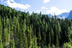 Красивый пейзаж горы Стоковые Фото