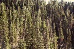 Красивый пейзаж горы Стоковая Фотография RF
