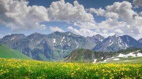 Красивый пейзаж гор с цветками стоковые изображения rf