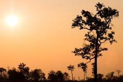 Красивый пейзаж захода солнца в цвете леса ярком оранжевом контраста неба с темным цветом тропического тропического леса Стоковое фото RF