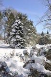 Красивый пейзаж зимы с снегом покрыл деревья Стоковые Фото