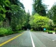 Красивый пейзаж леса! стоковые изображения