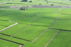 Красивый пейзаж страны рисовых полей Стоковое фото RF