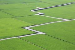 Красивый пейзаж страны рисовых полей Стоковая Фотография