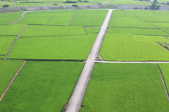 Красивый пейзаж страны рисовых полей Стоковое Фото