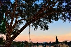 Красивый пейзаж с загоренным деревом, рождественскими елками над озером, русскими горками на предпосылке захода солнца в SeaWorld стоковое изображение rf
