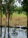 Красивый пейзаж mardan полей Стоковая Фотография RF