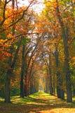 Красивый переулок в парке при красочные деревья стоя в желтой листве стоковые изображения rf