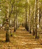 Красивый переулок осени в лесе Стоковое Фото