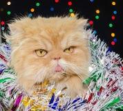 Красивый персидский кот с покрашенной сусалью рождества в оформлении рождества Стоковые Изображения