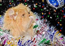 Красивый персидский кот с покрашенной сусалью рождества в оформлении рождества Стоковое фото RF