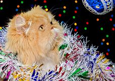 Красивый персидский кот с покрашенной сусалью рождества в оформлении рождества Стоковая Фотография RF