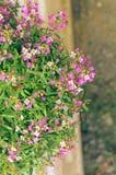 Красивый пинк цветет предпосылка Стоковые Изображения RF