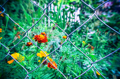 Красивый пинк цветет предпосылка Стоковое Изображение RF