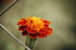 Красивый пинк цветет предпосылка Стоковые Фотографии RF