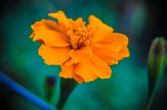 Красивый пинк цветет предпосылка Стоковые Фото