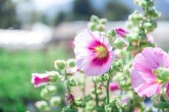 Красивый пинк цветет природа предпосылки Стоковые Фотографии RF