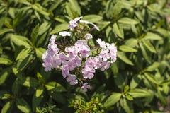 Красивый пинк цветков против яркой листвы Стоковое Изображение RF
