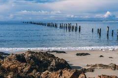 Красивый пляж на Bridport, Тасмании, Австралии Стоковые Изображения