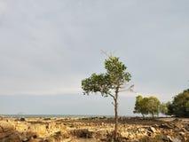 Красивый пляж утеса стоковое изображение