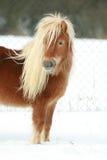 Красивый пони каштана с длинной гривой в зиме стоковые изображения rf