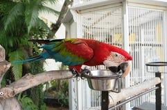 Красивый попугай на дереве Стоковое фото RF