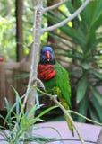 Красивый попугай птицы Стоковая Фотография RF