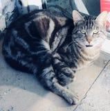 красивый портрет кота улицы стоковые фотографии rf