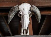 Красивый портрет смерти, череп коровы в тайском доме Стоковая Фотография