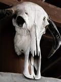 Красивый портрет смерти, череп коровы в тайском доме Стоковые Изображения RF