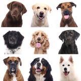 Красивый портрет счастливой собаки стоковая фотография