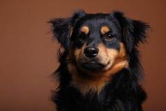 Красивый портрет счастливой собаки стоковые изображения