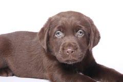 Красивый портрет счастливой собаки стоковое изображение rf