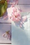 Красивый, предпосылка весны флористическая с цветками японской вишни зацветая Стоковые Фото
