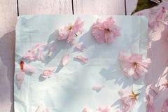 Красивый, предпосылка весны флористическая с цветками японской вишни зацветая Стоковые Изображения RF