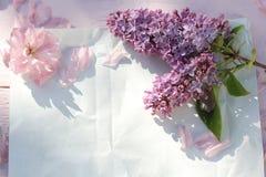 Красивый, предпосылка весны флористическая с цветками японской вишни зацветая Стоковая Фотография RF